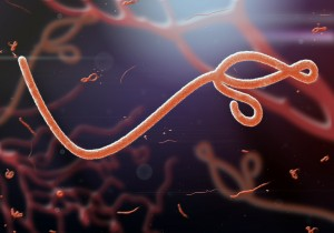 Microscopic view of the Ebola virus