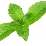 bigstock-Stevia-rebaudiana-sweet-leaf--33832256
